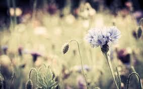 free download nice antique flower images