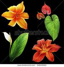flowers tropical garden on black background stock illustration