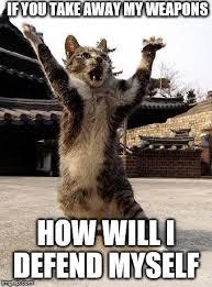 Meme Kung Fu - kung fu kitten memes imgflip