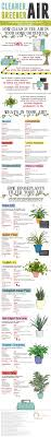 best 25 air cleaning plants ideas on pinterest apartment plants