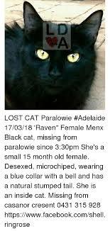 Lost Cat Meme - ld lost cat paralowie adelaide 170318 raven female menx black cat