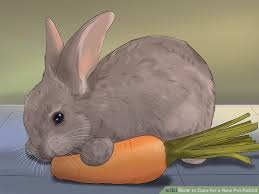Rabbit Hutch For 4 Rabbits 5 Ways To Care For A New Pet Rabbit Wikihow