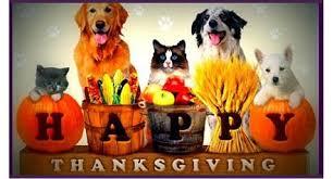 pasadena now thanksgiving pet safety tips pasadena california