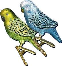 209 best budgies images on parakeets parrots and budgies