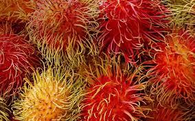 fruits tropical bing exotic wallpaper 30105