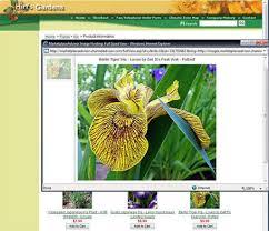 texas native plants database top 10 u0027tiger u0027 plants houston chronicle