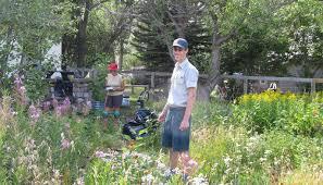 native plant restoration montana wildlife gardener community native plant garden