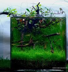 Aquarium Aquascaping 111 Best Cube Aquascape Ideas Images On Pinterest Aquascaping