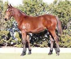 inglis 2017 great southern sale lot 166 sidestep x babelicious