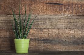 8 Houseplants That Can Survive by The Best Houseplants That Are Almost Impossible To Kill