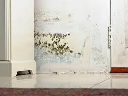 Bathroom Wall Pictures by How To Remove Black Mold Hgtv