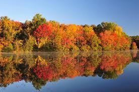 peak fall colors autumn leaves