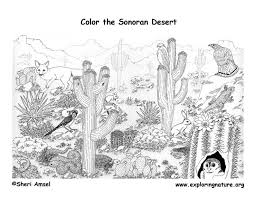 desert sonoran detailed coloring
