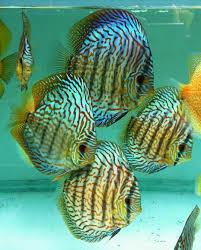 hamdan ornamental fish farm agriculture tirur station