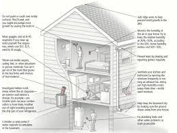 what can i do to minimize the mold in my home ask doctor k