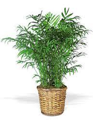 plante de chambre des plantes dans la chambre à coucher topfouine com