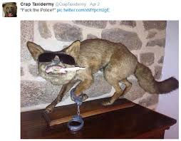 Taxidermy Fox Meme - you already thought taxidermy was weird just wait until you see
