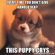 Cute Puppy Meme - every time you don t give arnold sex this puppy crys cute puppy