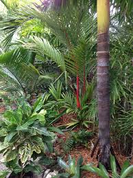 Trees Worldwide Garden Update Discussing Palm Trees Worldwide Palmtalk Green