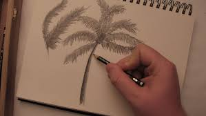 how to draw a palm tree in pencil youtube