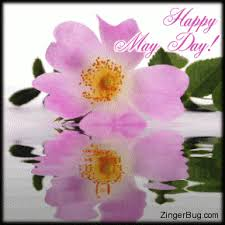 May Day Meme - happy may day reflecting pink blossom glitter graphic greeting