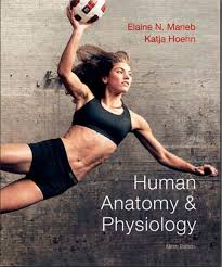 Download Ross And Wilson Anatomy And Physiology Physiology U2013 Free Medical Books