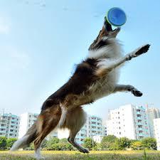 australian shepherd frisbee huiyi home 22cm dog toy frisbee blue plastic resistant bite pet