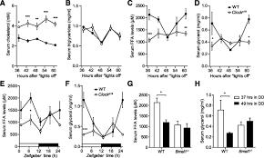 circadian regulation of lipid mobilization in white adipose