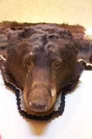 Taxidermy Bear Rug 87 Best Peaux De Bêtes Images On Pinterest Bear Skin Rug Furs