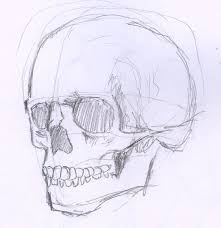 29 best skeletons images on pinterest skull sketch drawings and