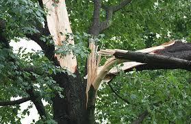 bartlett tree experts emergency tree service