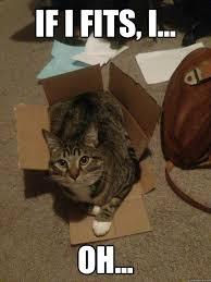 Fat Cat Meme - funny fat cat memes