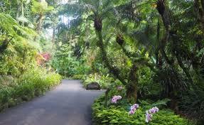 Kona Botanical Gardens Hawaii Tropical Botanical Garden Kona Reef Condo D 26