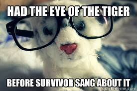 Eye Of The Tiger Meme - hipster tiger memes quickmeme