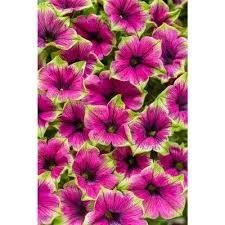 Home Depot Flower Projects - annuals garden plants u0026 flowers the home depot
