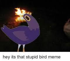 Meme Bird - o hey its that stupid bird meme meme on me me