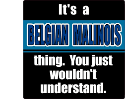 belgian malinois quotes 47 best malinois stickers labels images on pinterest sticker