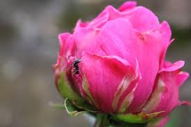 beautiful plants plant photography uri botanical gardens blog
