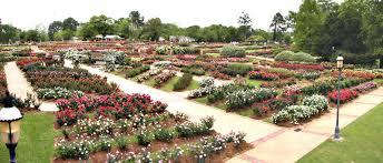 Texas Vegetable Garden Calendar by Roses East Texas Gardening