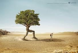 print ad columbia tree