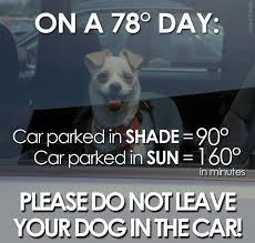 Law Dog Meme - new law can save dogs lives hot car law sit means sit of palm