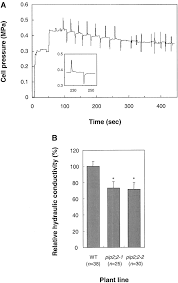 role of a single aquaporin isoform in root water uptake plant cell