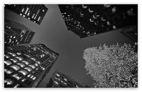 black and white christmas wallpaper black and white san francisco christmas 4k hd desktop wallpaper
