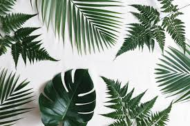 Inspiration Interiors Monday Inspo Interiors Plants U2013 Hewnly