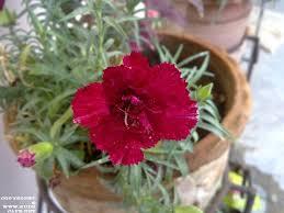 flowers blooming in july heat u2013 indian garden blog