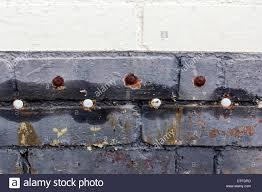 damp roofing u0026 d u0026 proofing sc 1 st pinterest