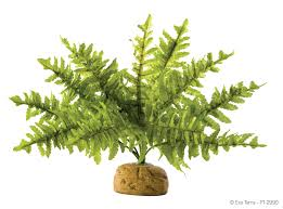 Fern Decor by Exo Terra Rainforest Ground Plants