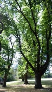 Geelong Botanic Gardens by Kyneton Botanic Gardens Easy Day Trip From Melbourne Go For