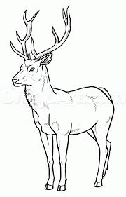 deer drawings for kids thumbpng coloring pages maxvision