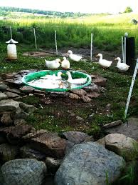 making a duck pen google search animal crazy pinterest